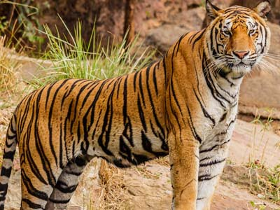 National Animal of India